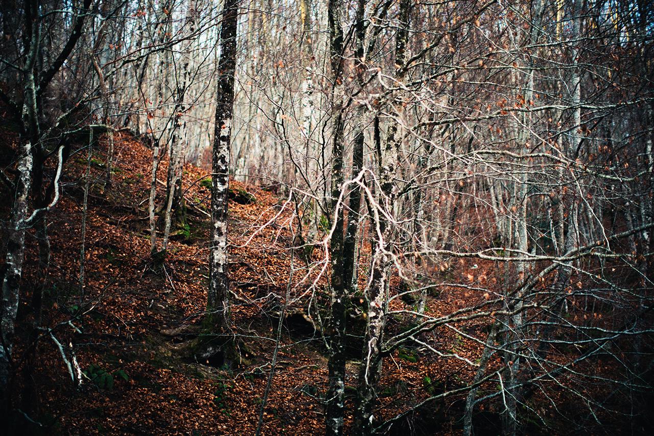 woods calling
