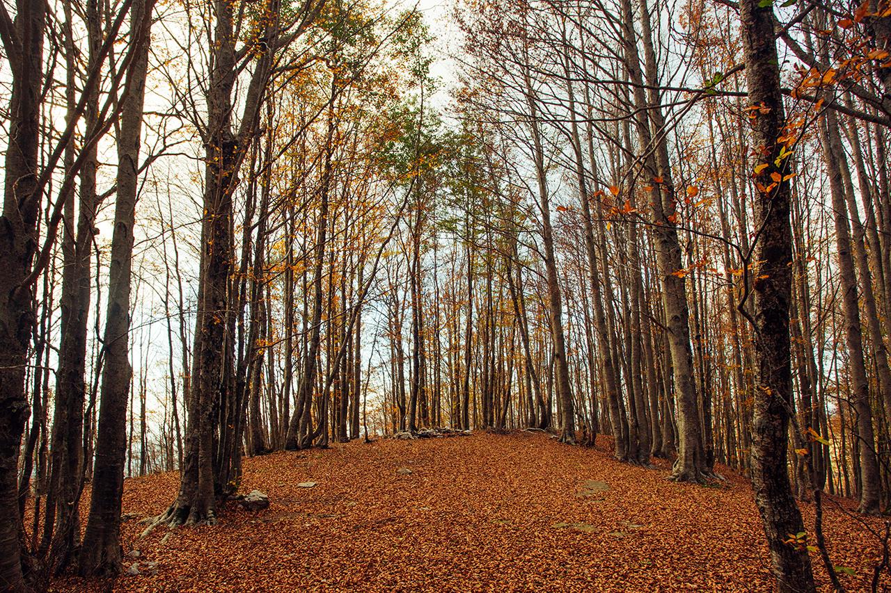 sirino autunno collina