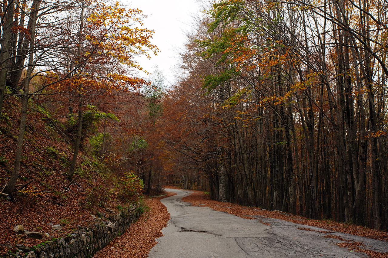sirino autumn road