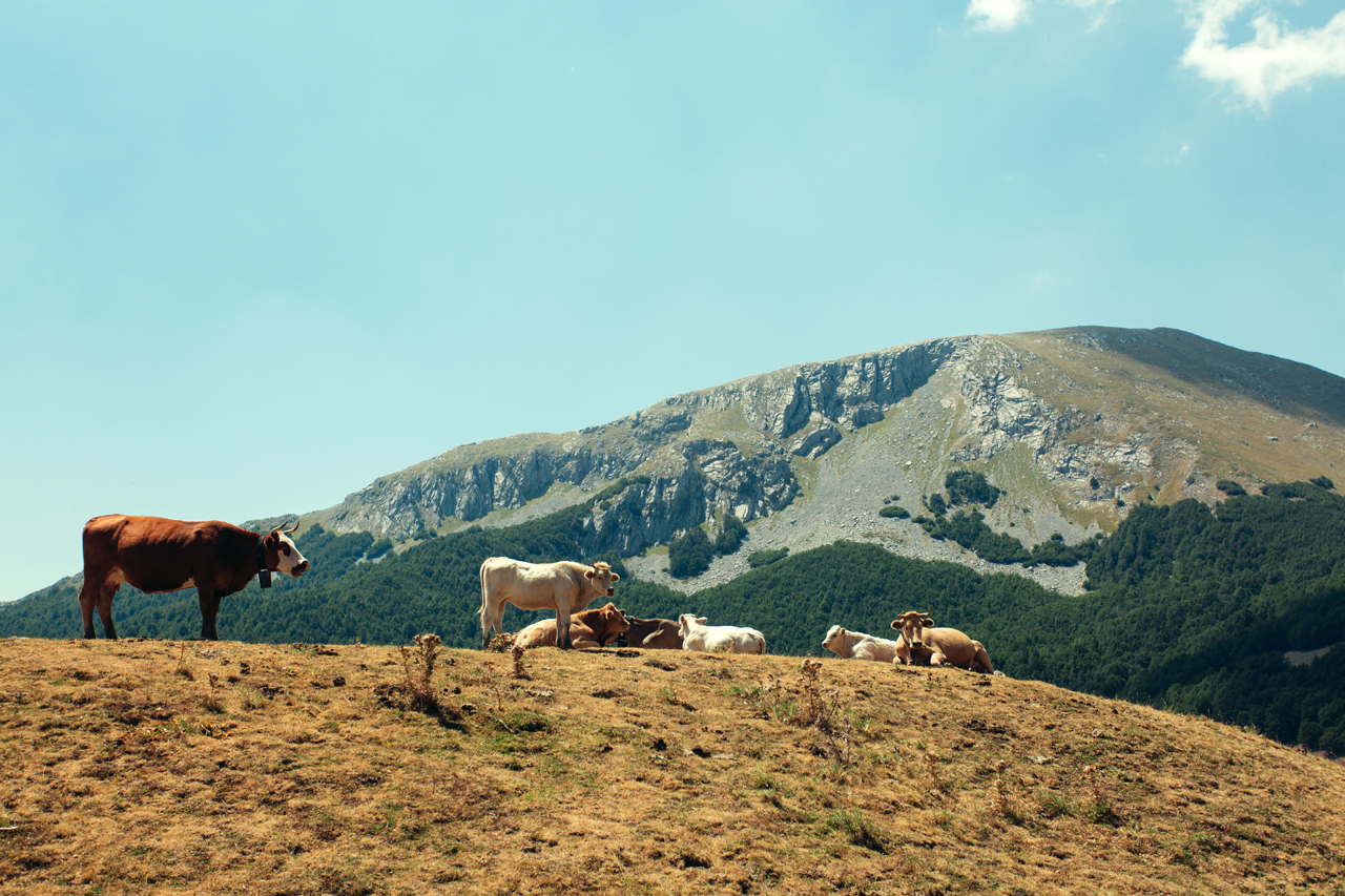 mt pollino with cows