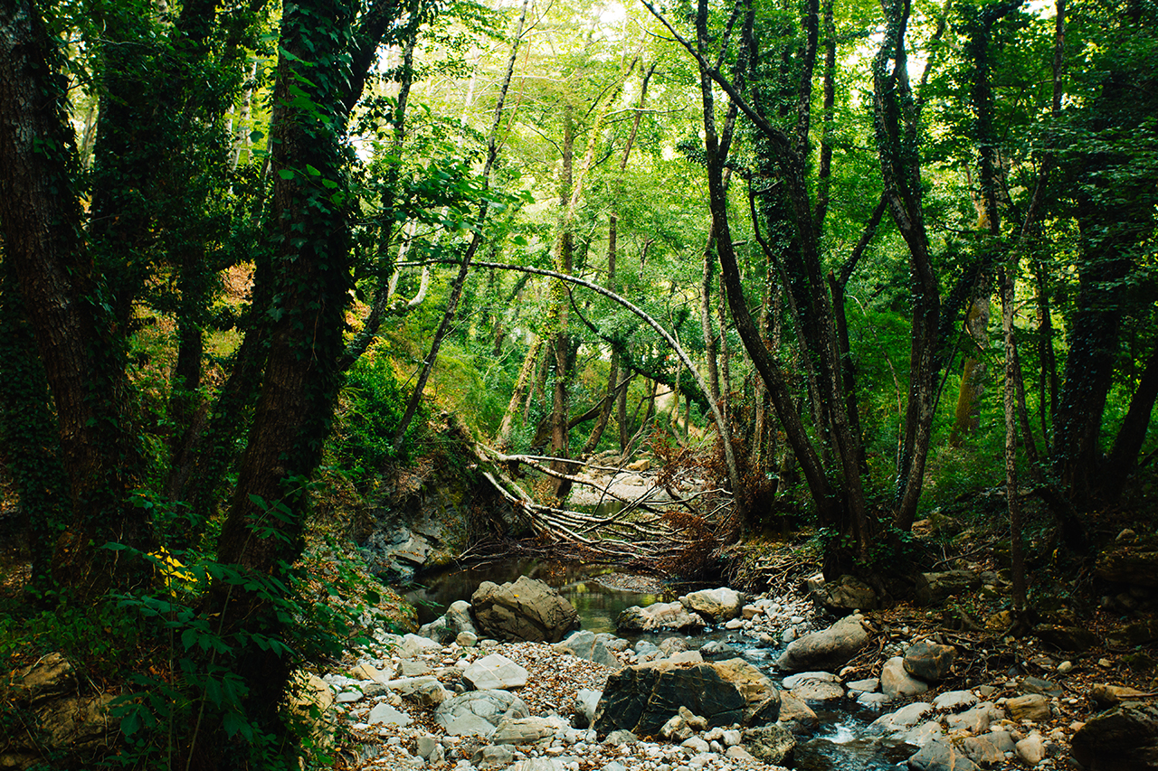bosco canicella creek