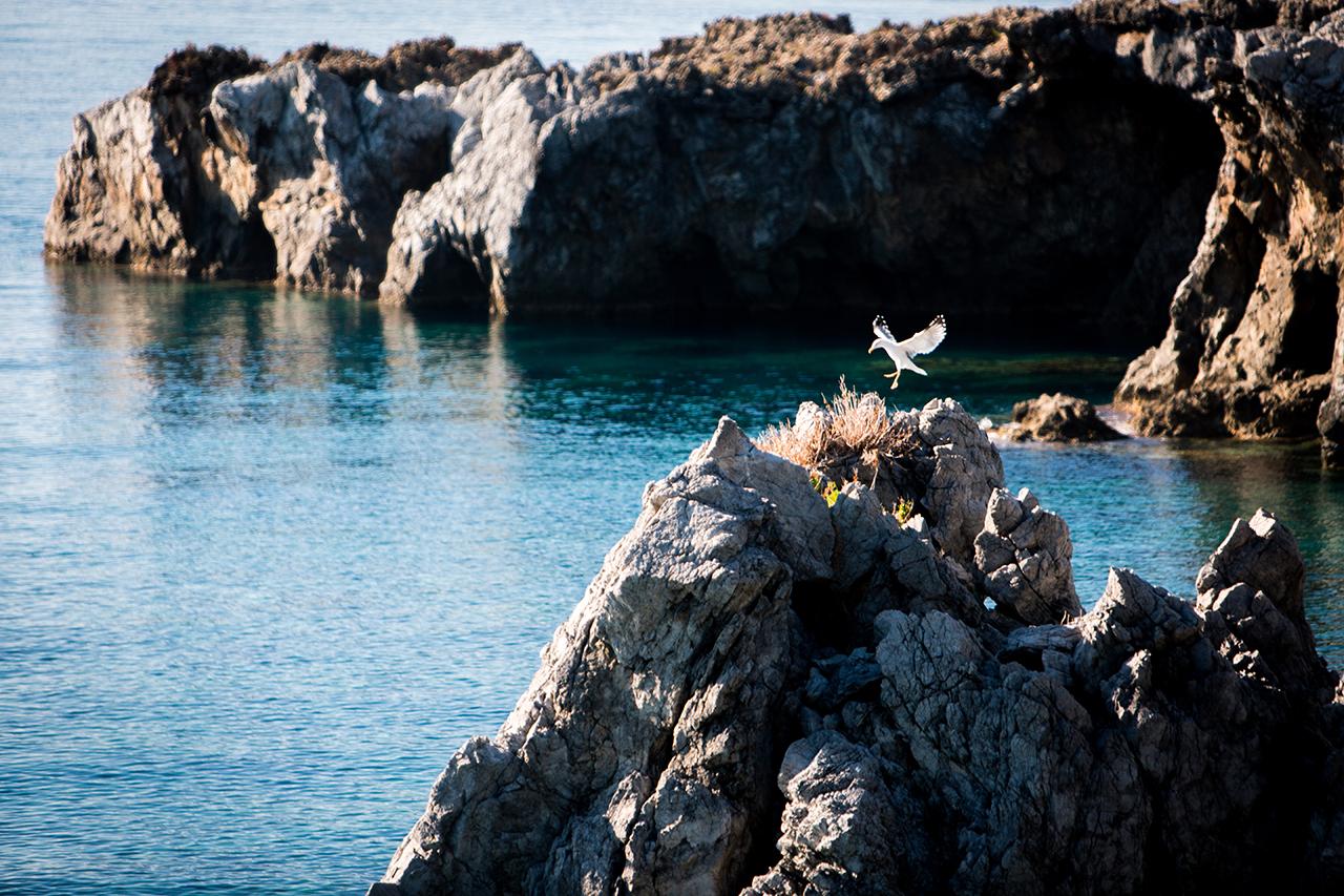 maratea bird landing