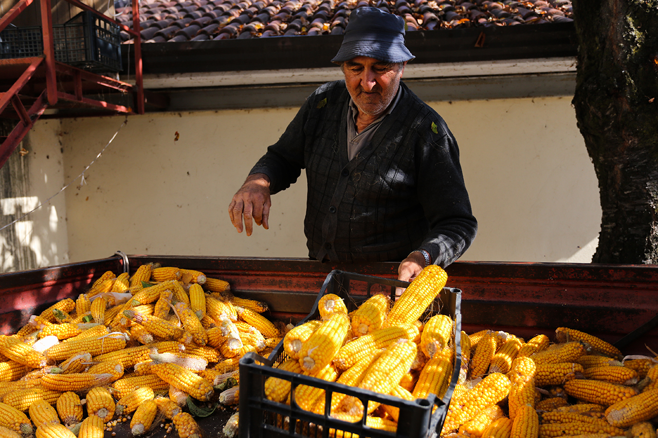 giuseppe farmer corn