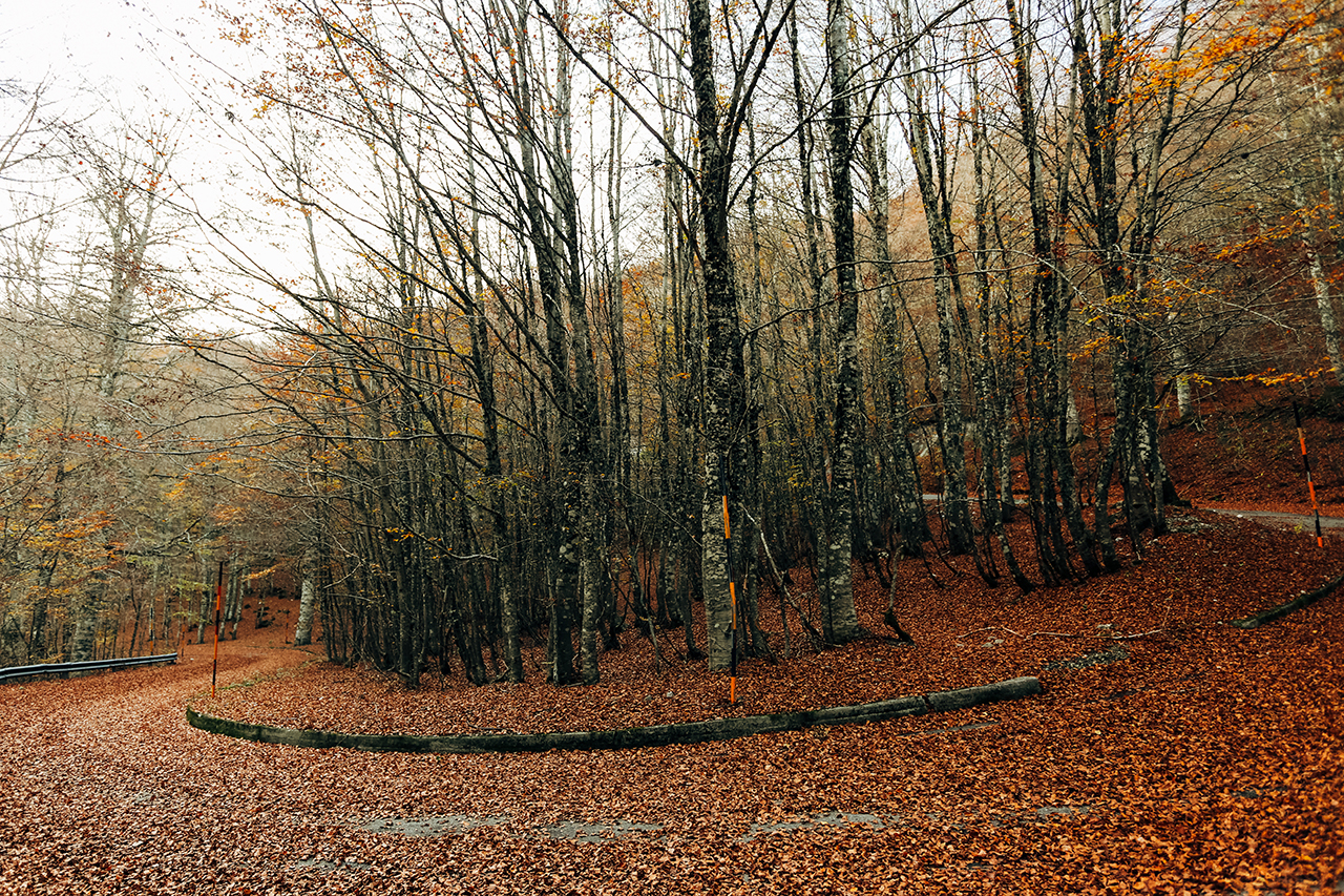 pollino red bends