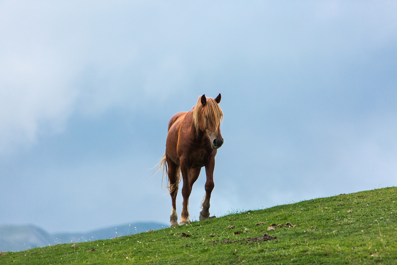 pollino horse with no name