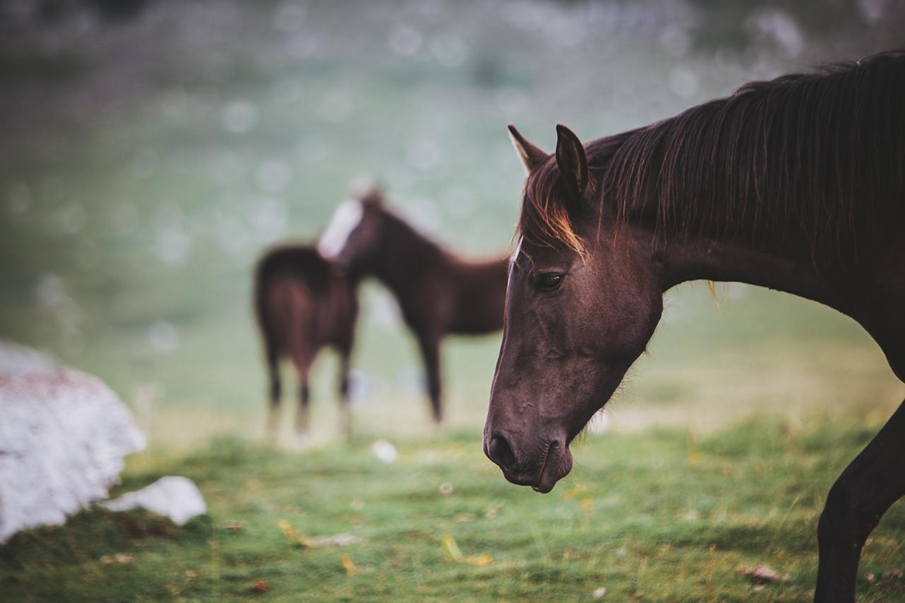 sad horse pollino