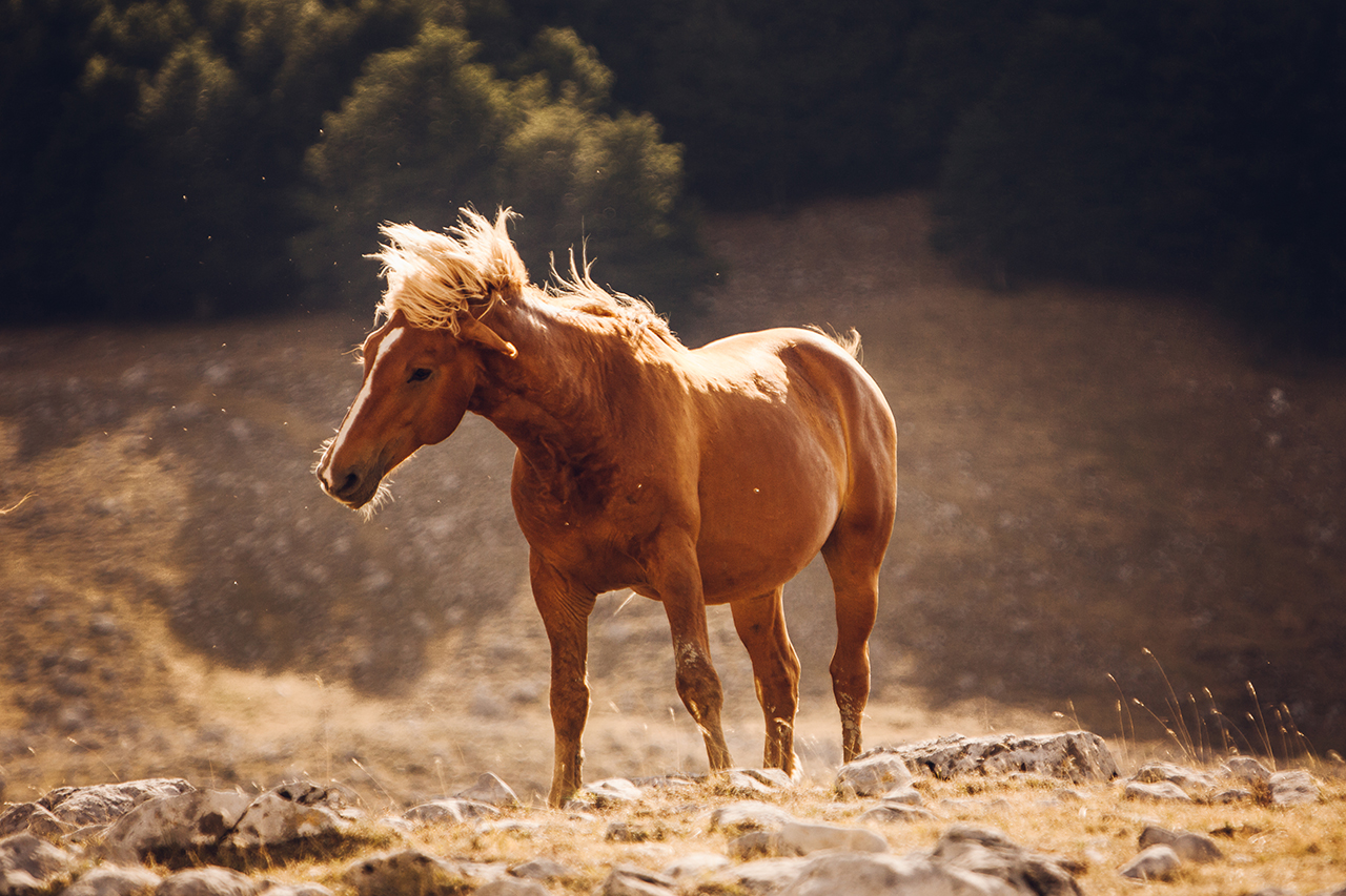 """young horse on mt. pollino"""