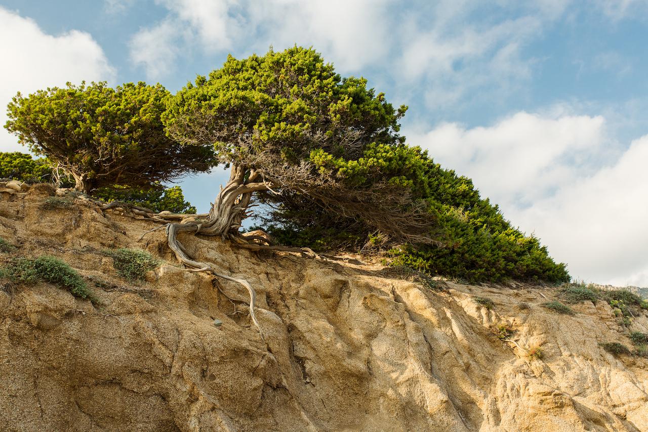 alberi sulla spiaggia sardegna