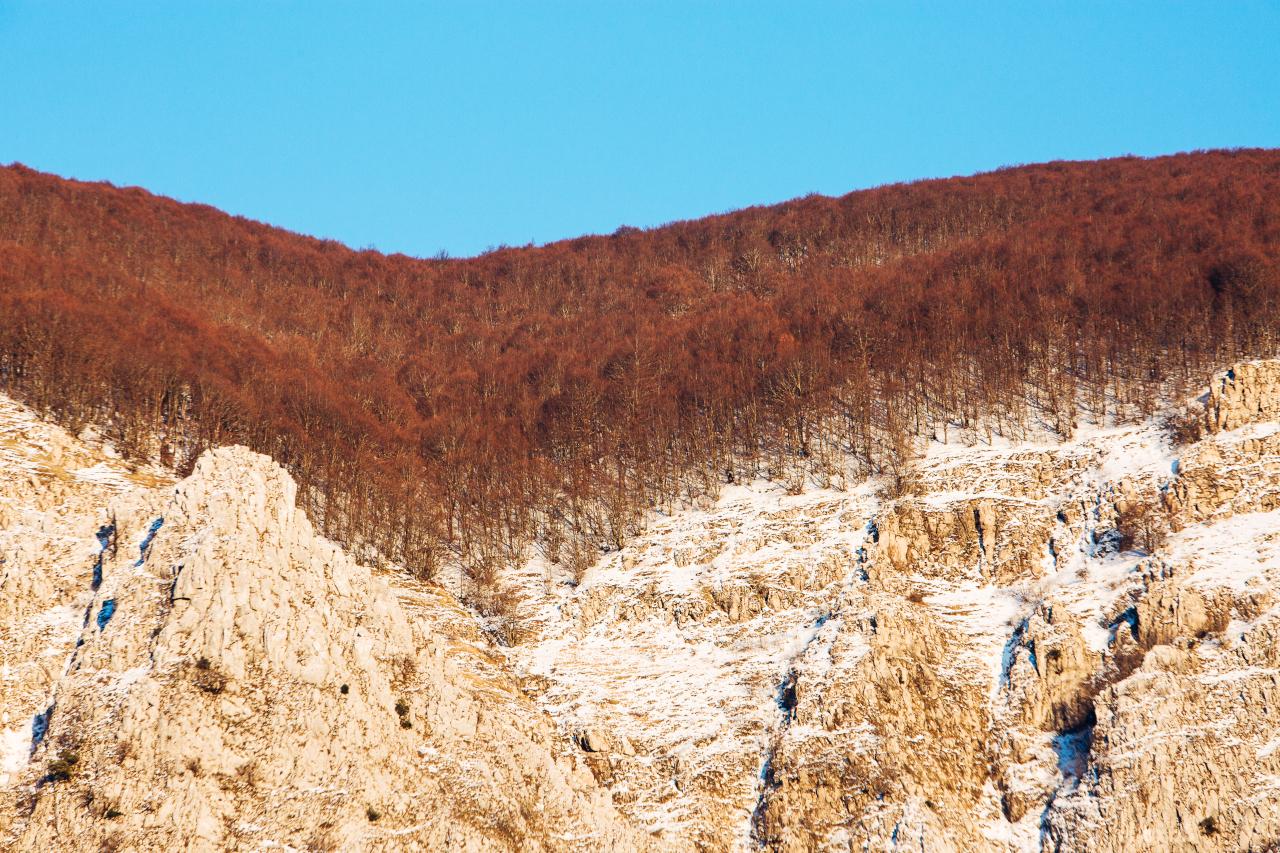 monte alpi alberi rossi
