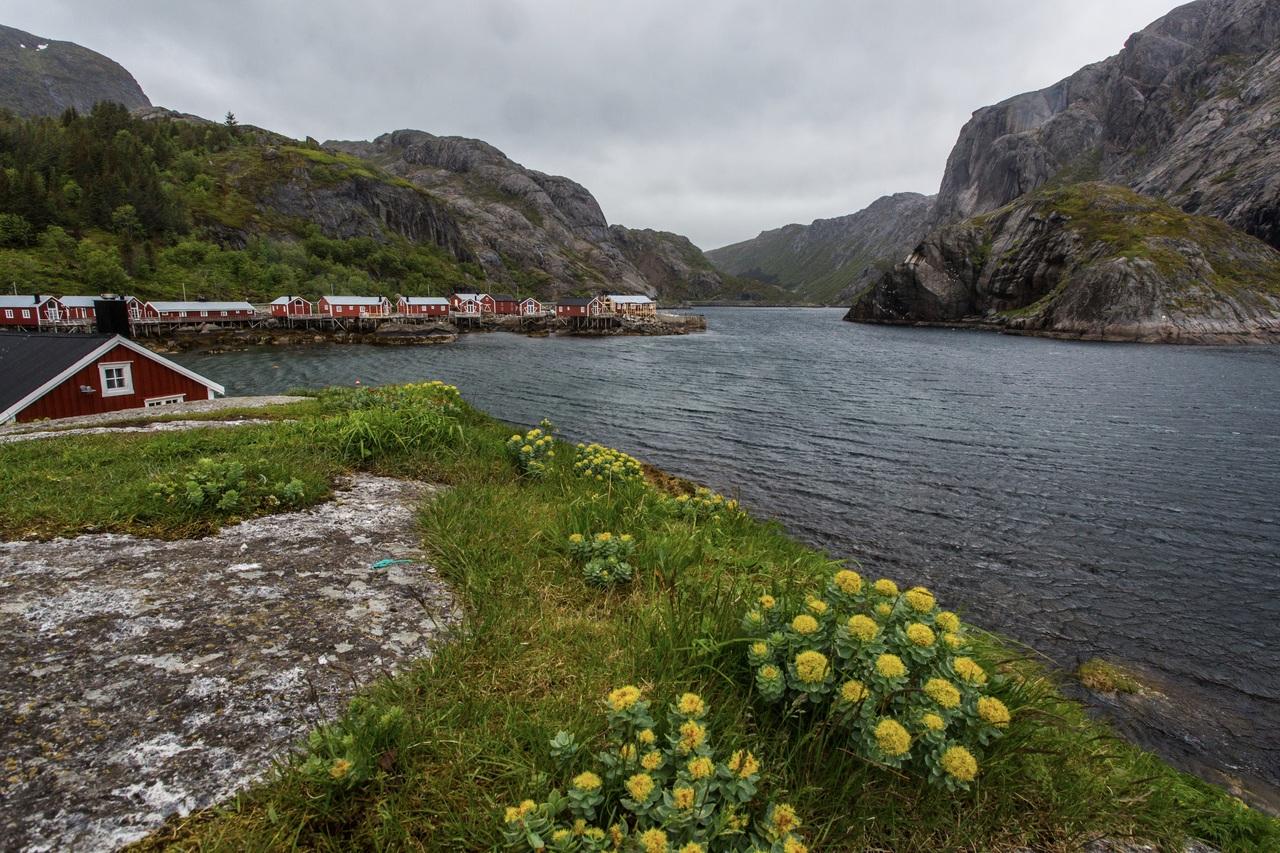 lofoten nusfjord green