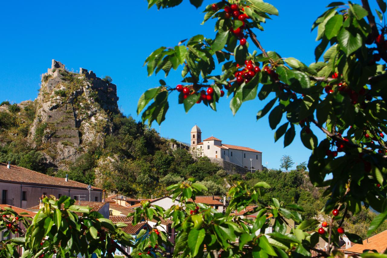 lauria cherry tree