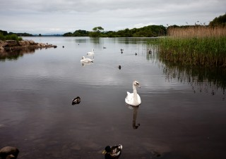 White Swan Dark Waters