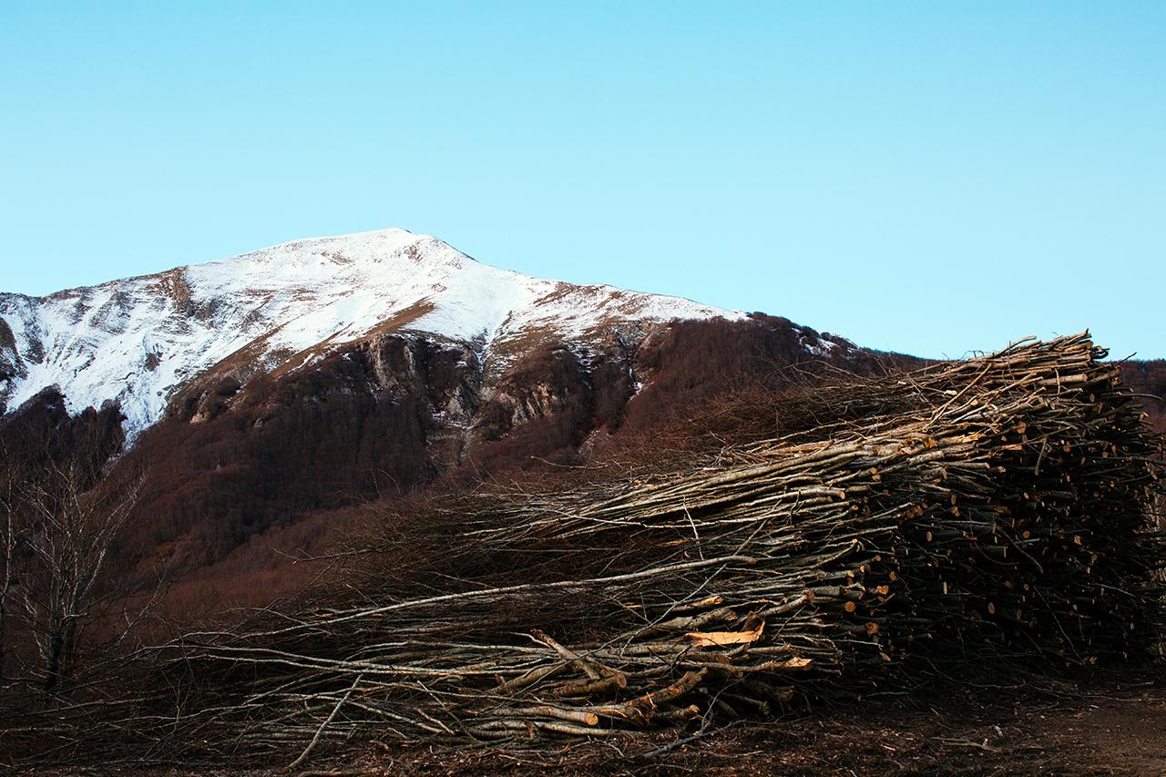 sirino felled trees
