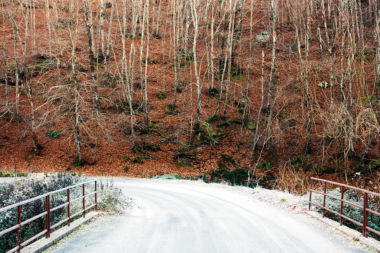 sirino stada con brina e bosco
