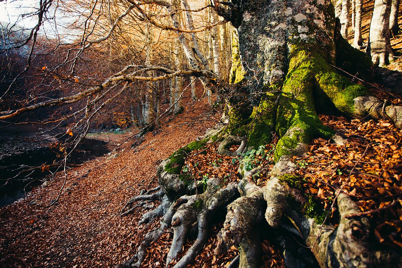 laudemio_roots