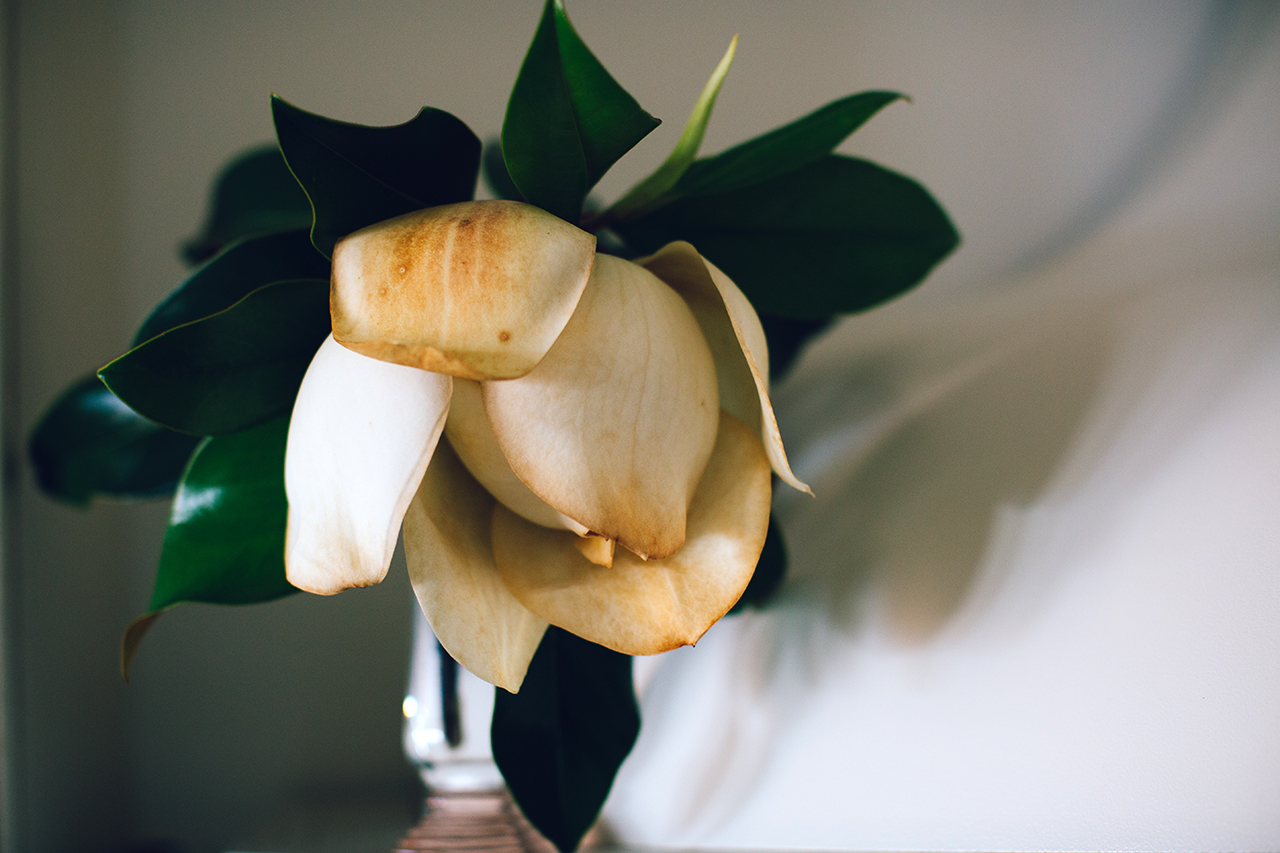 dying magnolia