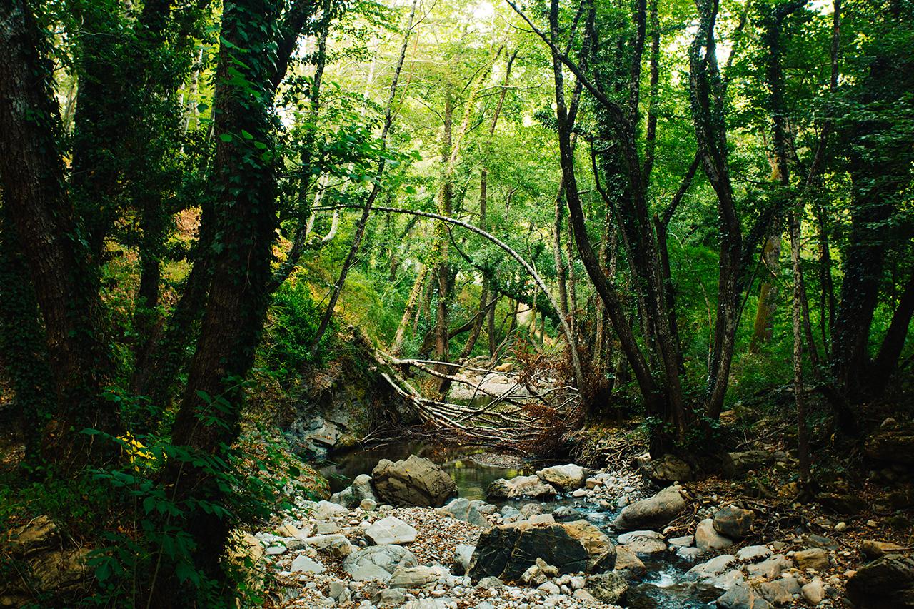 bosco canicella creek