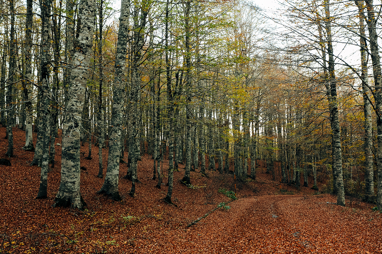 pollino autumn roads