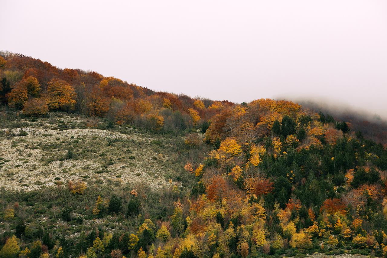 dark colours of autumn
