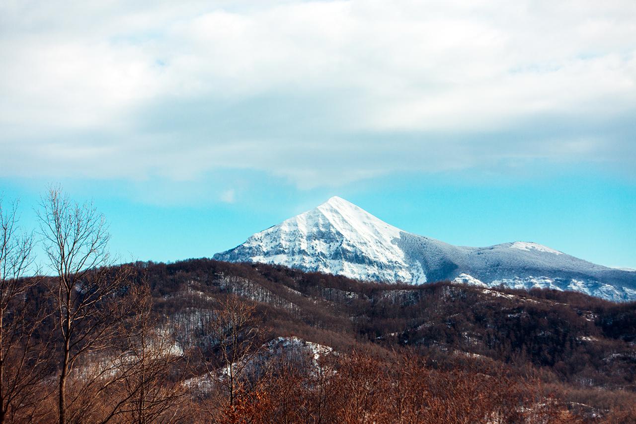 monte alpi e alberi rossi