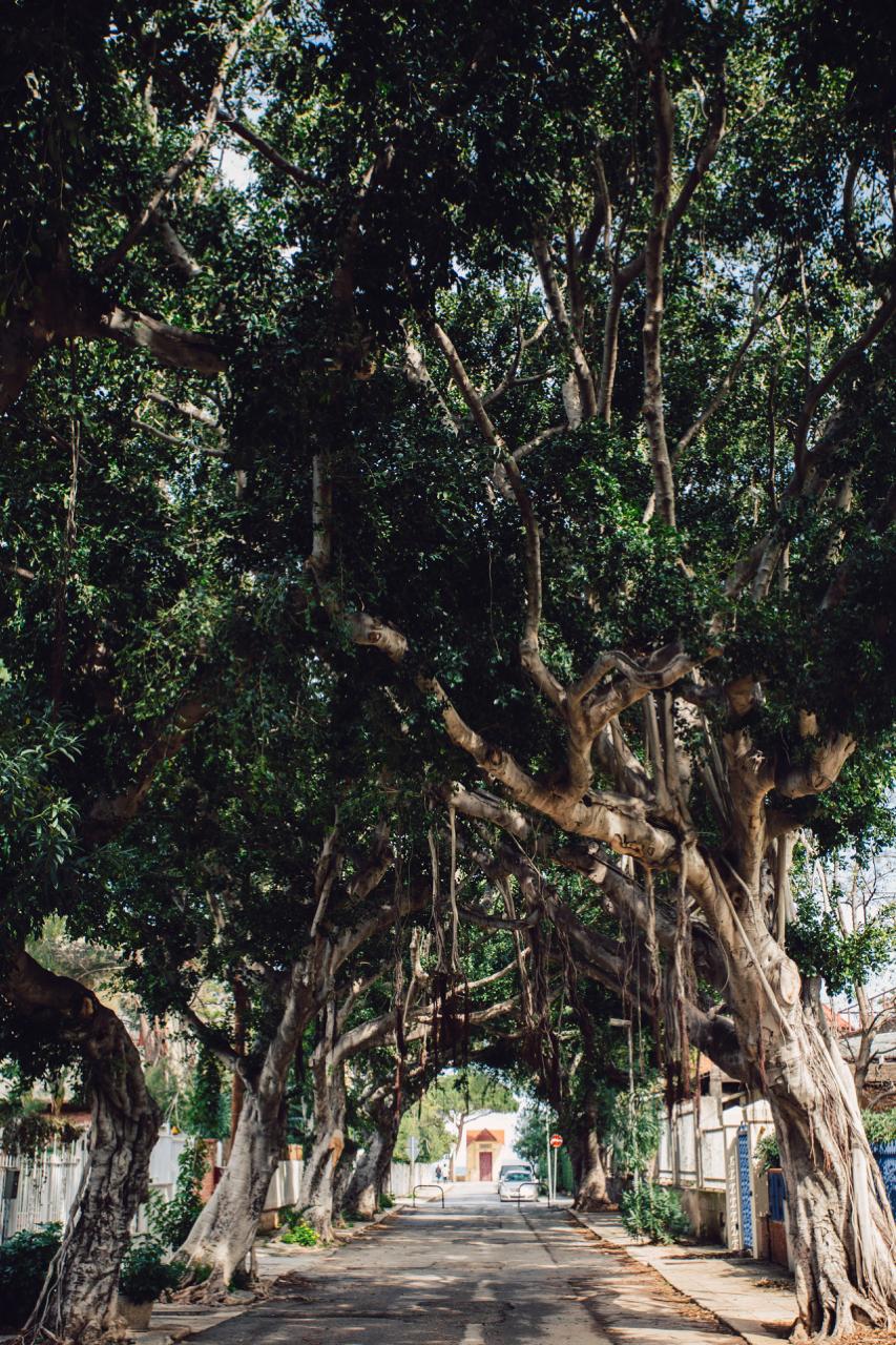 mondello alberi