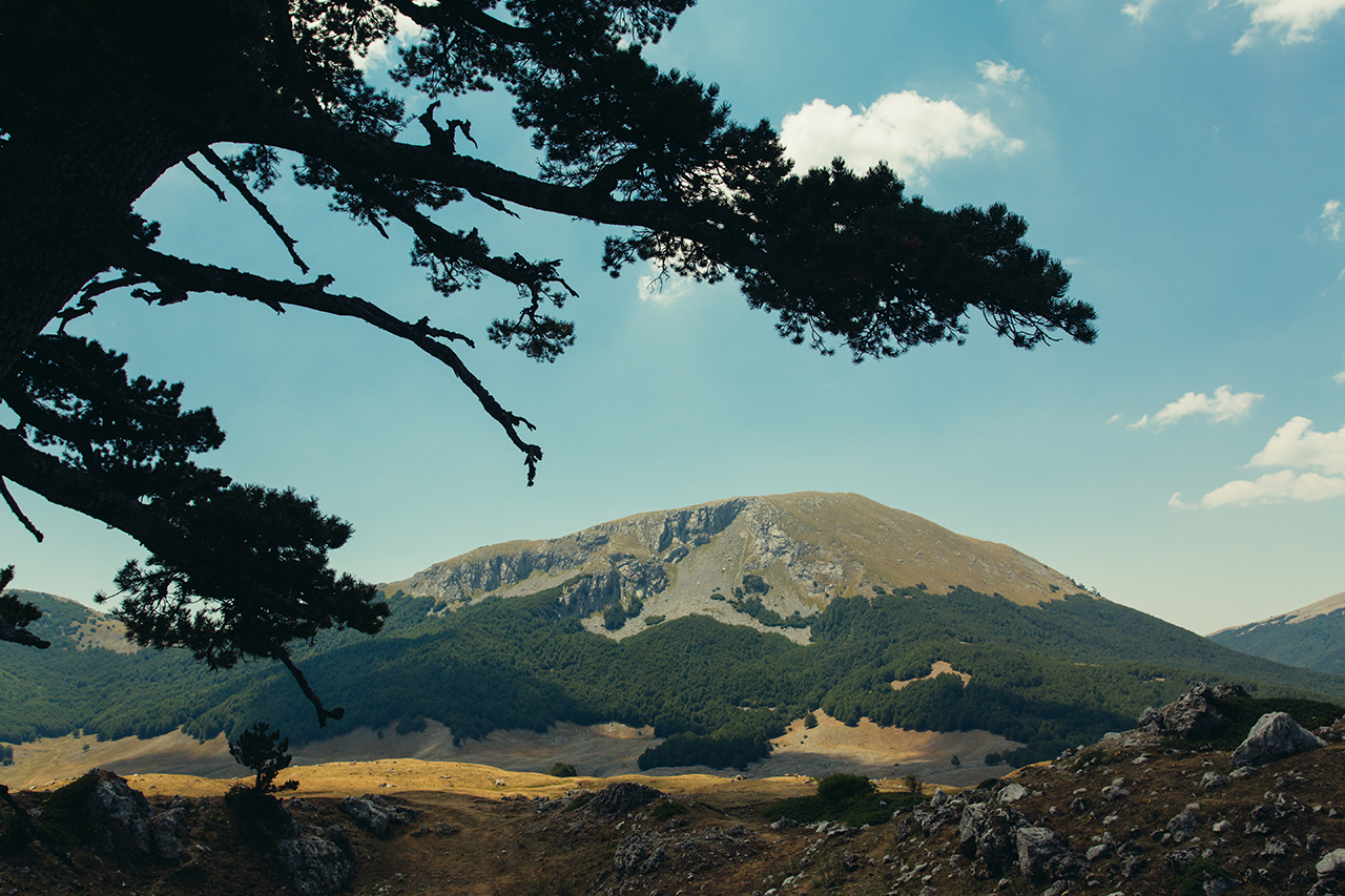 tree branches and mt pollino